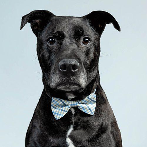 Jasper the Office Dog